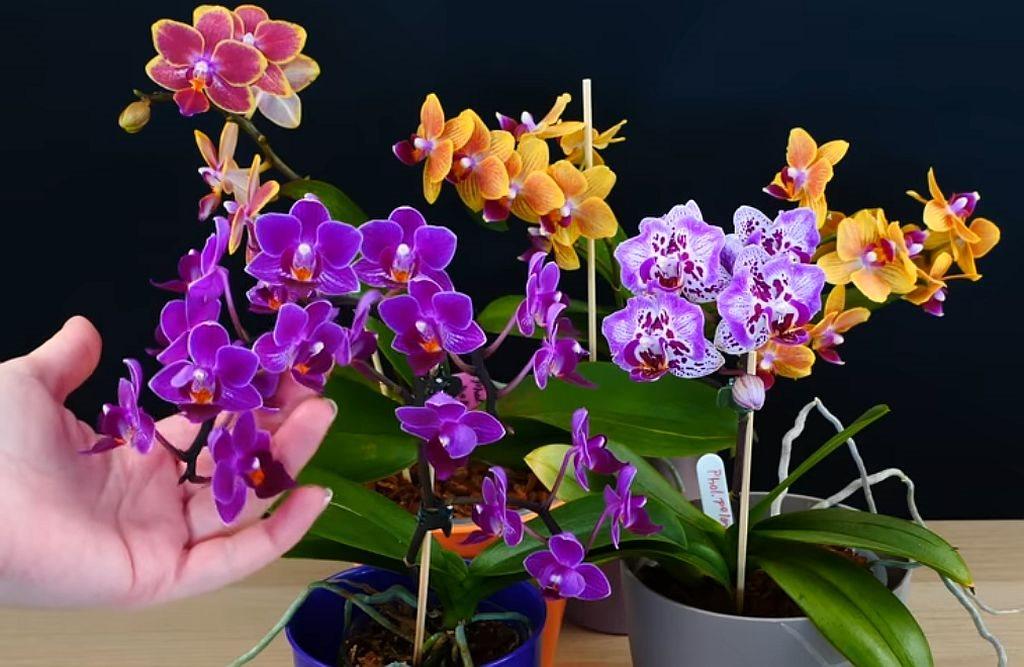 orhideja sta donosi u dom