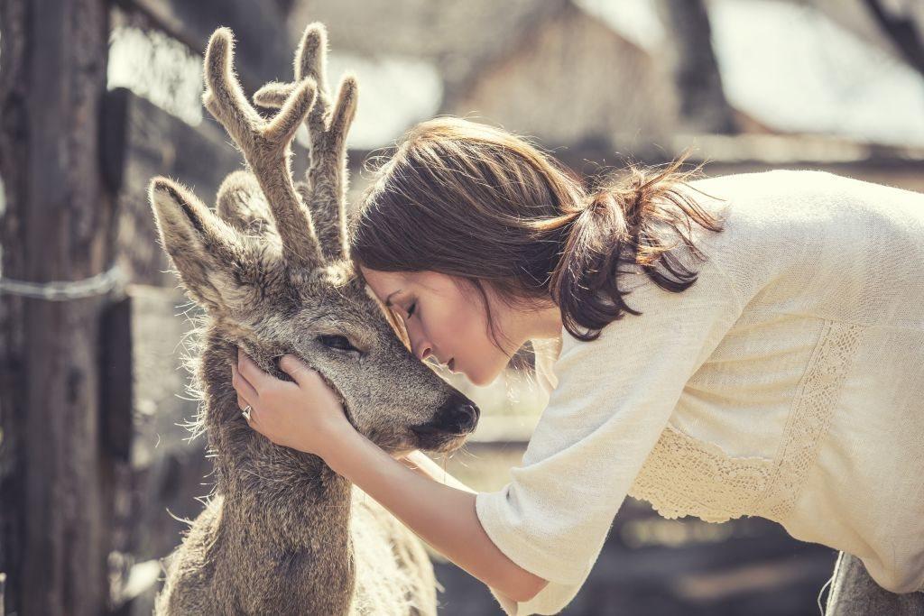Duhovno značenje jelena415674490