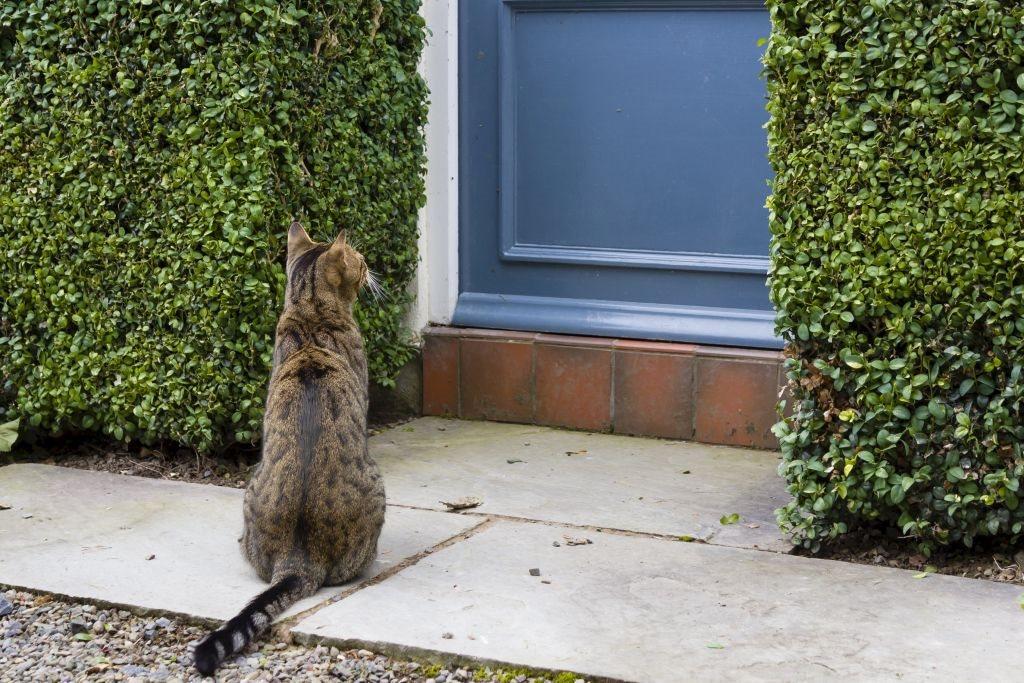 Šta znači kada se na kućnom pragu pojavi tuđa mačka_1487527232