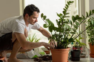 Feng šui biljka za privlačenje novca_1659164515