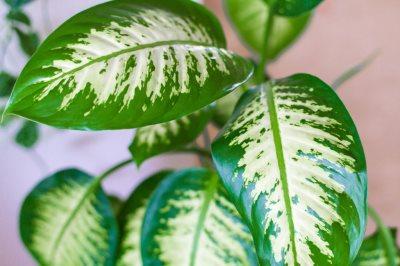 biljke koje cisti vazduh_1710618349
