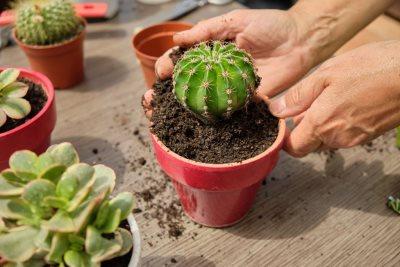 Feng šui biljke koje ne treba držati u kući_1966469809
