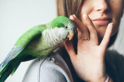 ptica simbol rodjenja1046460031